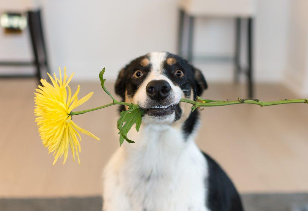 Keyword flowers